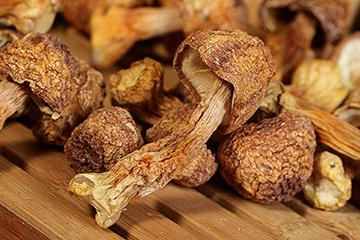 姬松茸的功效与作用及营养价值